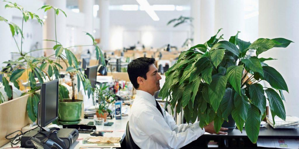 Озеленение офиса и уход за растениями