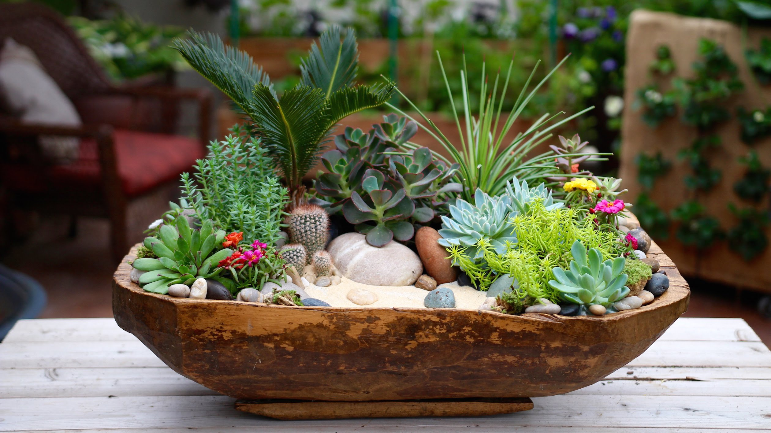 Комнатные растения - суккуленты, композиция из суккулентов
