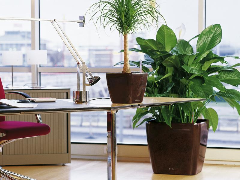 Уход за растениями в офисе несложен