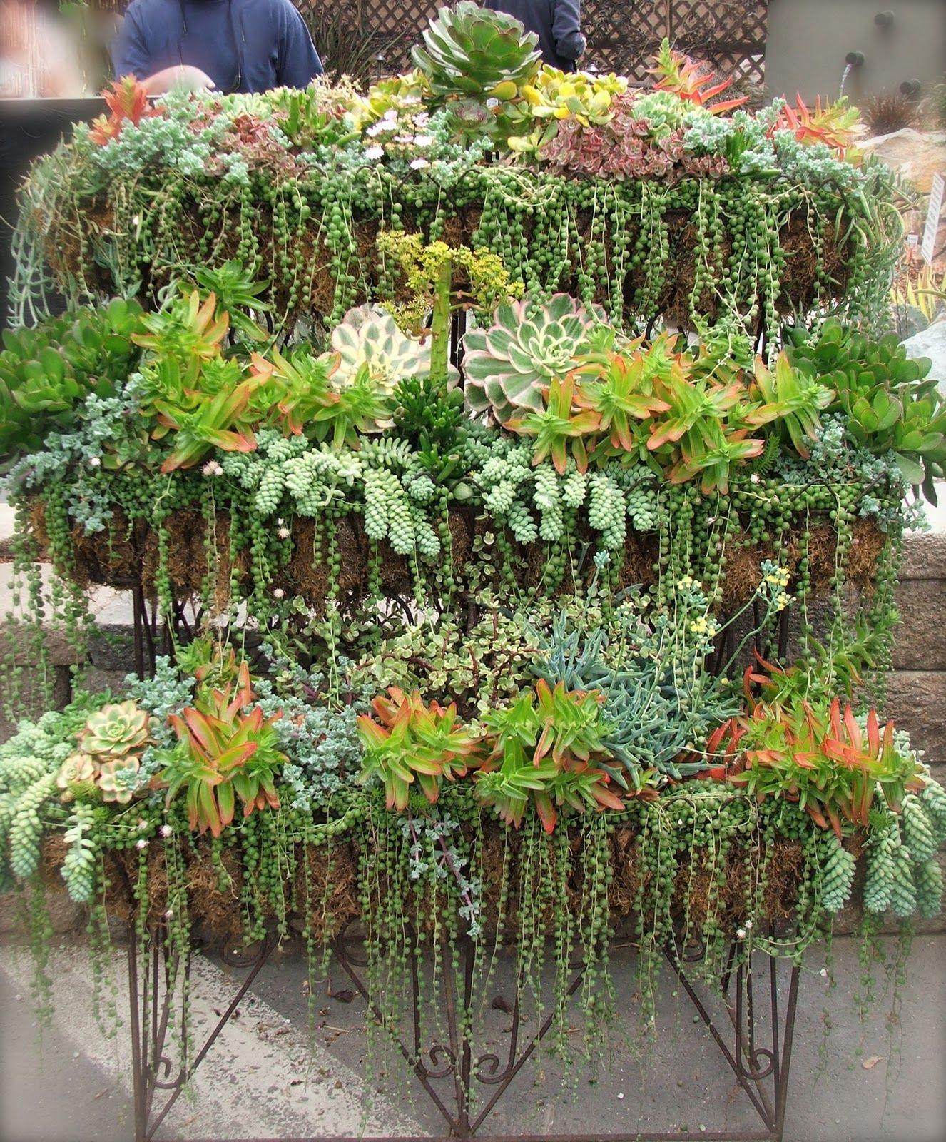Комнатные растения - суккуленты.