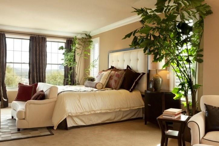 Неприхотливые растения для спальни