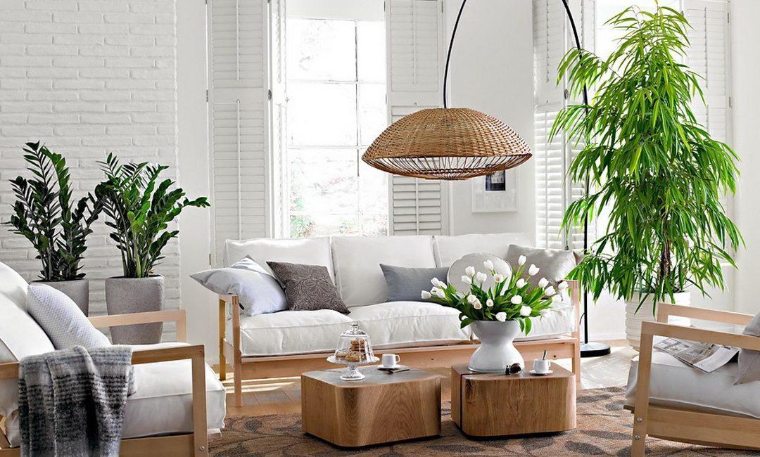 Растения в интерьере квартиры, принципы фитодизайна