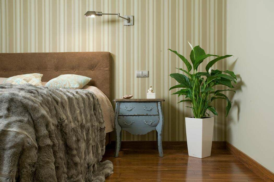 Растения для спальни , спатифиллум