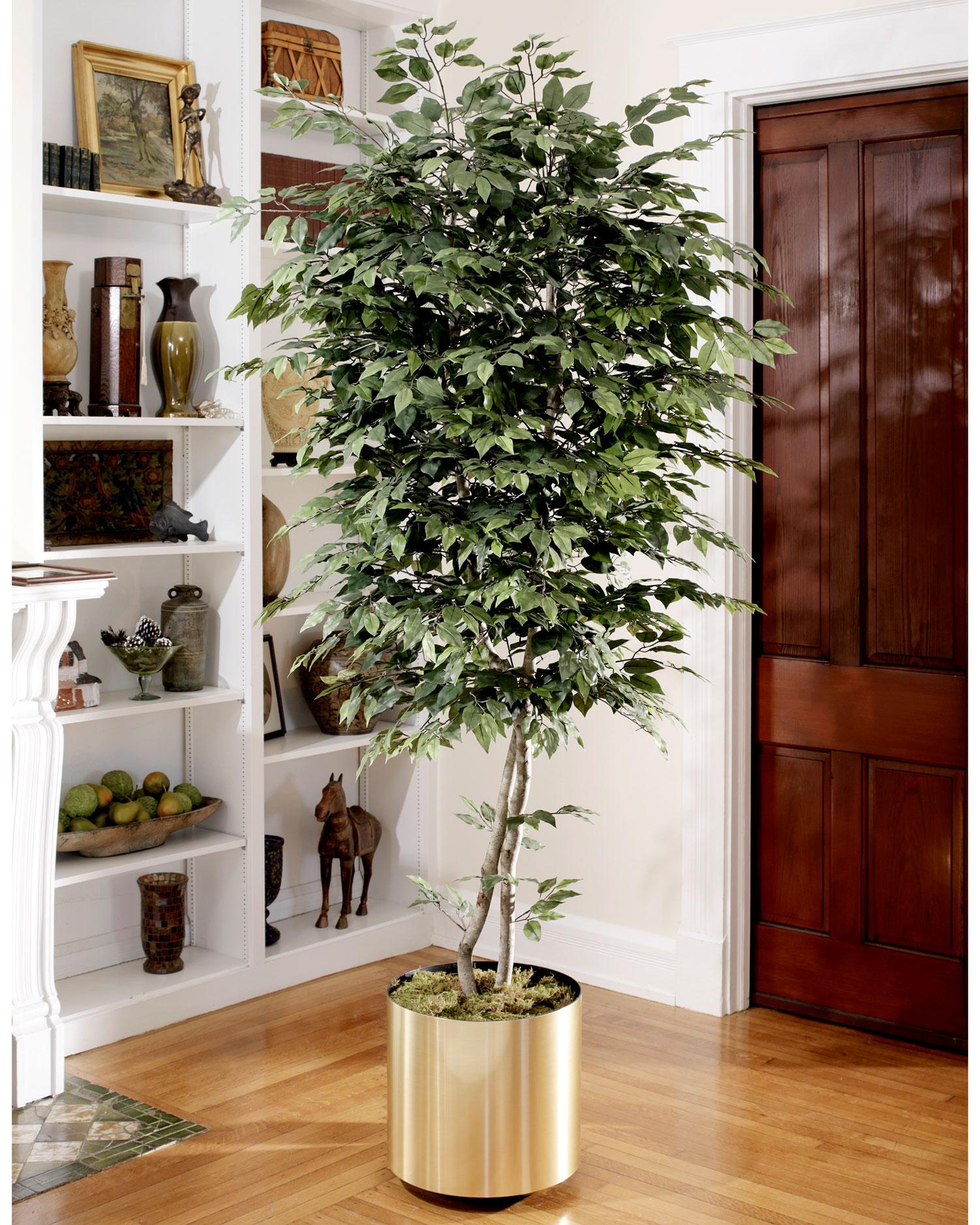 Растения в интерьере квартиры, крупномеры