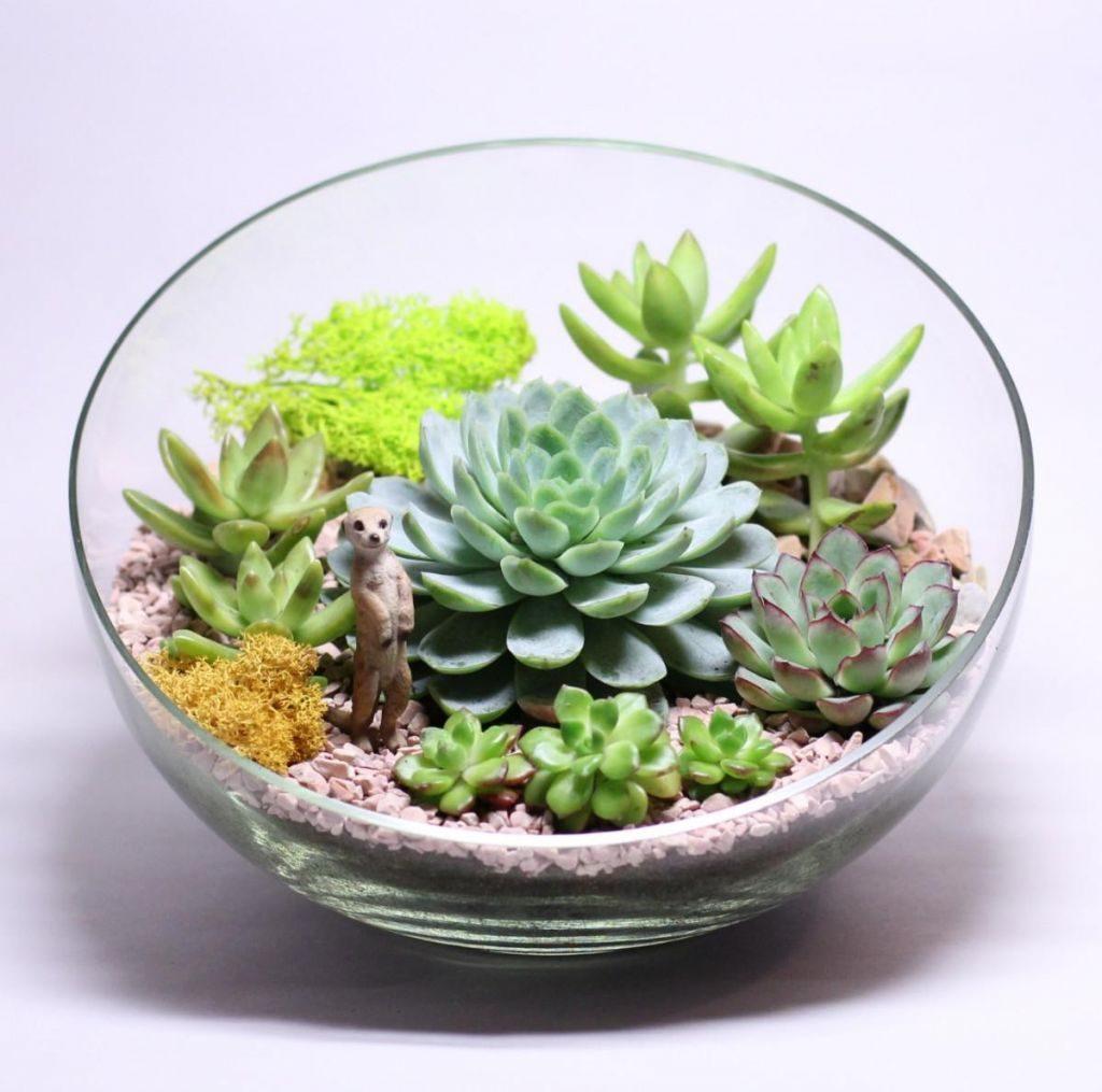 Флорариум с суккулентами, эчеверии и очиток