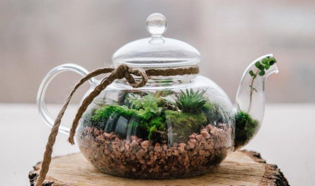 Необычный подарок своими руками, флорариум в чайнике