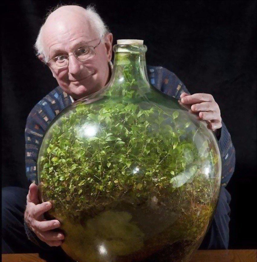 Бутылочный сад Дэвида Латимера