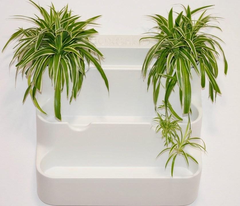 фитомодуль для растений