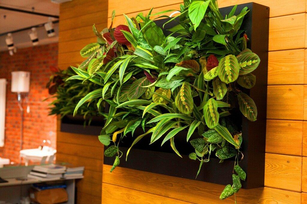 фитокартина из живых растений