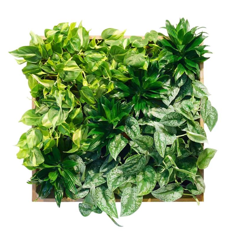фитокартины, подбор растений