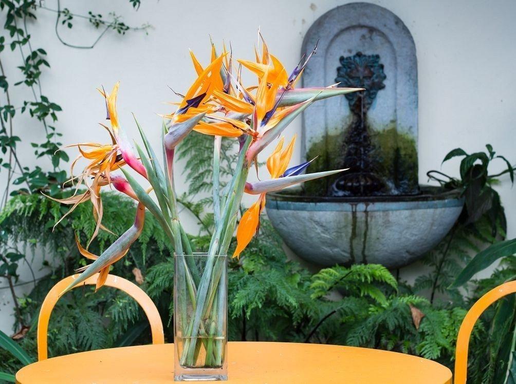 букет из цветов стрелиции